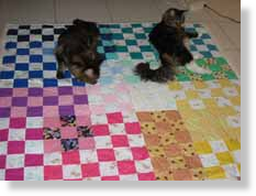 Baby_Play_Quilt_Cats